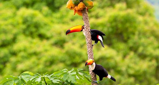 A fauna de Itacaré e a diversidade ambiental